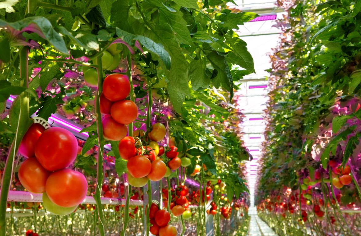 欧司朗新型植物技术:无论在哪儿都能让你吃到新鲜的食品